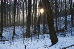 Halny las przy zimą Fotografia Royalty Free