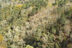 Halny las w Galicia Hiszpania Zdjęcia Royalty Free