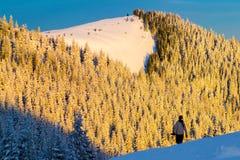 Halny las w śniegu zdjęcia royalty free