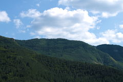 Halny las w pogodnym chmurnym dniu Obraz Stock