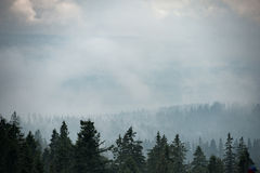 Halny las zakrywający mgłą Obraz Royalty Free