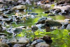 Halny lasowy strumień Obrazy Royalty Free