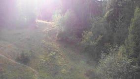 Halny lasu krajobraz Mknący drzewa od quadrocopter Piękny Halny las zbiory wideo