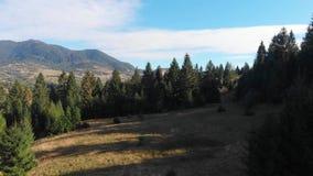 Halny lasu krajobraz Mknący drzewa od quadrocopter Piękny Halny las zbiory