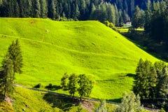 Halny lato krajobraz z łąką Fotografia Stock