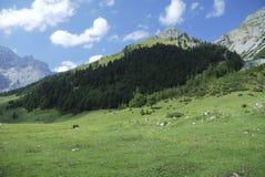 halny paśnik Tirol Obraz Stock