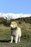 Halny pasterski pies Zdjęcie Royalty Free