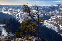 Halny plateau Lago Naki Północny Kaukaz, Rosja obrazy royalty free