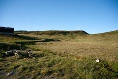 Halny plateau Valdresflye, Jotunheimen Zdjęcie Royalty Free