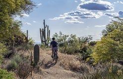 Halny rowerzysta na bujny pustyni śladzie W Arizona obrazy stock
