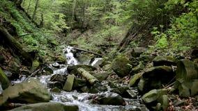 Halny rzeczny spływanie między kamieniami w zielonej lasowej Halnej siklawie zbiory wideo