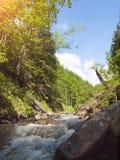 Halny rzeczny spływanie przez conifer lasu zdjęcie royalty free