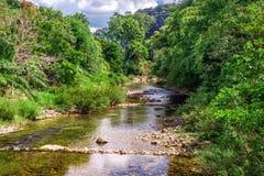 Halny rzeczny spływanie przez zielonego lasu Zdjęcie Stock