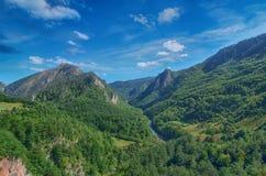 Halny rzeczny Tara i las w Montenegro Zdjęcie Stock