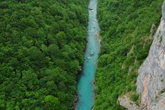 Halny rzeczny Tara spływanie przez lasu zdjęcie stock