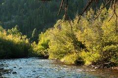 halny skalisty strumień Zdjęcie Royalty Free
