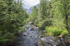 Halny strumień Krupa w Tatrzańskich górach, Sistani Zdjęcie Royalty Free