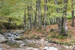 Halny strumień przez lasu fotografia royalty free