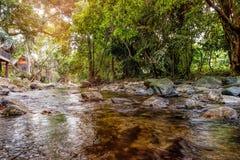 Halny strumień w zielonym lesie w słońce promieniach Obraz Stock