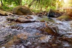 Halny strumień w zielonym lesie w słońce promieniach Khao Sok park narodowy, Tajlandia Obrazy Royalty Free