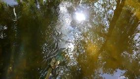 Halny strumień z odbiciem w wodnym świetle słonecznym zbiory