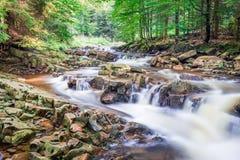 Halny strumień z widokami las Fotografia Royalty Free