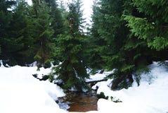 Halny strumień zakrywający śniegiem Zdjęcia Stock
