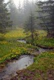 halny strumień Obraz Stock