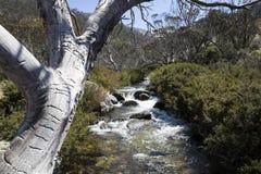 Halny strumień, Thredbo Obrazy Royalty Free