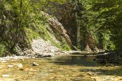 Halny strumień w lesie Zdjęcia Royalty Free