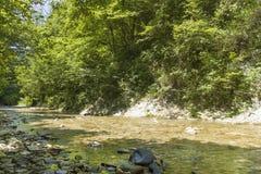 Halny strumień w lesie Fotografia Royalty Free