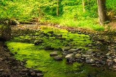 Halny strumień w starym lesie Fotografia Stock