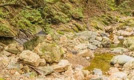 Halny strumienia spływanie przez małej doliny Fotografia Royalty Free