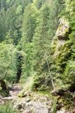 Halny strumienia spływanie wśród stromych skłonów Rhodope Mo Fotografia Stock