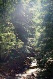 Halny strumienia spływanie wśród stromych skłonów Rhodope Mo Obrazy Royalty Free