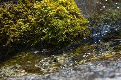 Halny strumienia zakończenie Up Przepływ woda wśród kamieni zakrywających z mech Fotografia Royalty Free