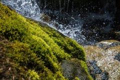 Halny strumienia zakończenie Up Przepływ woda wśród kamieni zakrywających z mech Obrazy Royalty Free