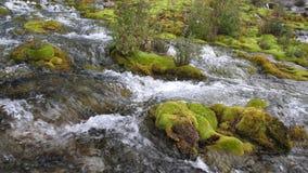 Halny strumyk wśród kamieni zakrywających z zielonym mech przejrzysty, czysty prąd woda, płynie wśród mech 4K zbiory wideo