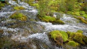 Halny strumyk wśród kamieni zakrywających z zielonym mech Zwolnione tempo 180fps przejrzysty, czysty prąd wodni przepływy, zdjęcie wideo