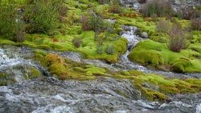 Halny strumyk wśród kamieni zakrywających z zielonym mech Zwolnione tempo 180fps przejrzysty, czysty prąd wodni przepływy, zbiory
