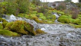 Halny strumyk wśród kamieni zakrywających z zielonym mech Zwolnione tempo 180fps przejrzysty, czysty prąd wodni przepływy, zbiory wideo