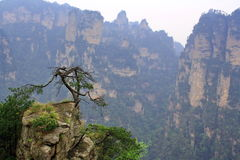 halny tajemniczy Zhangjiajie Zdjęcia Royalty Free