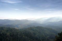 Halny tropikalny las deszczowy Fotografia Stock
