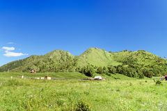 Halny wielbłąd blisko Chemal Altai republika, Rosja Obrazy Royalty Free