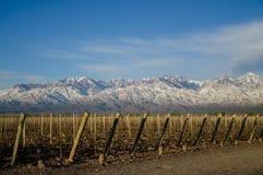 Halny wino fotografia stock