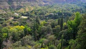 Halnych drzew środowiskowy tło zdjęcia royalty free
