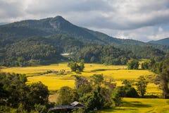 Halnych ryż pole Fotografia Stock