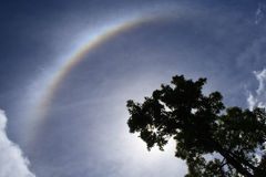 Halo_008. Backlit tree and halo, a meteorological phenomenon, in a cloudy sky. Sun is shining through branches Royalty Free Stock Images