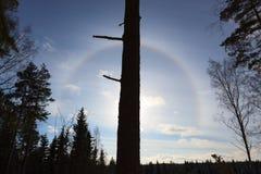 Halo around sun behind tree trunk at day. Halo around sun positioned behind tree trunk at day stock image