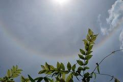 Halo de Sun et nuage mince photo stock